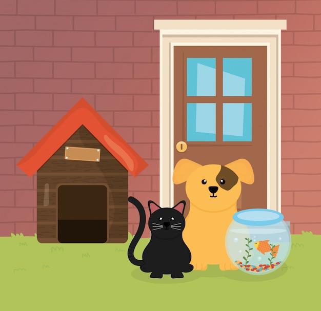 Insegua il gatto e il pesce nella cura dell'animale domestico del giardino della casa della ciotola