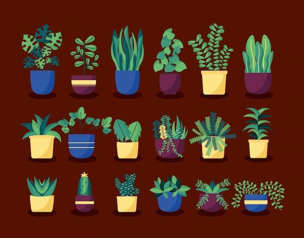 Insieme decorativo di interior design delle piante di casa
