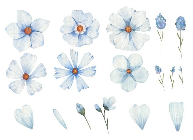 Insieme dei fiori blu dei tipi differenti acquerelli dell'illustrazione di clipart su fondo bianco