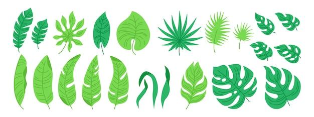 Insieme del fumetto di foglie tropicali. fogliame astratto esotico, piante piatte. monstera, palma e foglia selvatica