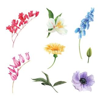 Insieme del germoglio di fiore dell'acquerello, illustrazione degli elementi isolati