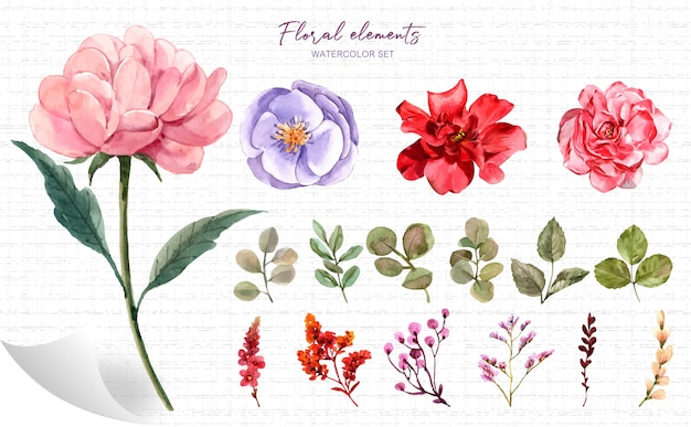 Insieme dell'acquerello degli elementi floreali.