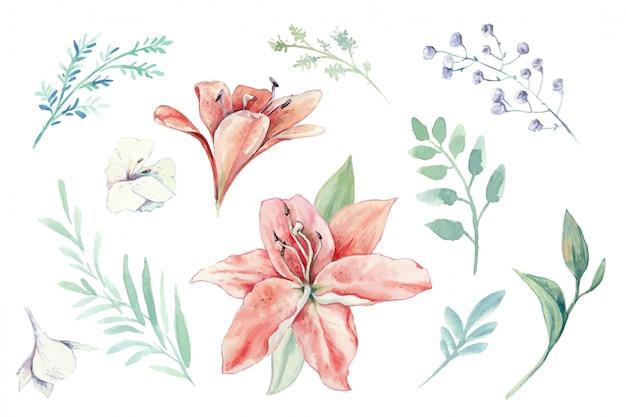 Insieme dell'acquerello di gigli, gemme e foglie