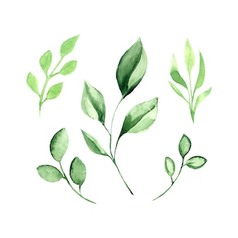 Insieme dell'acquerello di vettore delle foglie verdi.