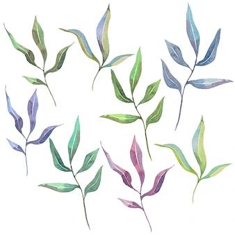 Insieme dell'acquerello disegnato a mano di foglie naturali