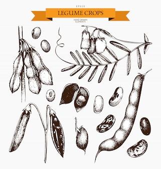 Insieme dell'annata dei legumi su bianco. collezione di piante agricole disegnata a mano