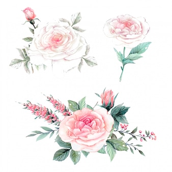 Insieme dell'annata delle rose rosa dell'acquerello.