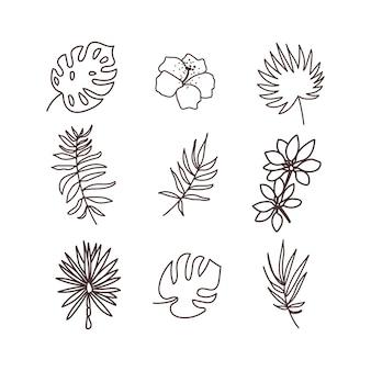 Insieme dell'icona di piante tropicali. disegnare a mano