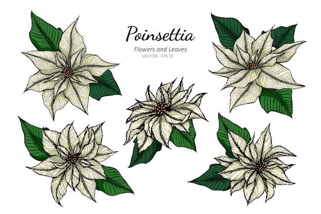 Insieme dell'illustrazione bianca del disegno del fiore della stella di natale con la linea arte