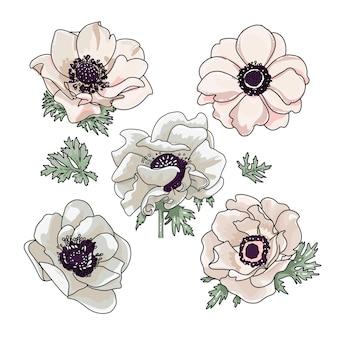 Insieme dell'illustrazione degli anemoni per progettazione del mazzo floreale