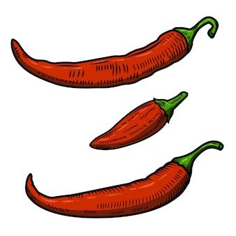 Insieme dell'illustrazione del peperoncino su fondo bianco. elemento per poster, menu.