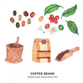 Insieme dell'illustrazione dell'acquerello dei chicchi e delle piante di caffè