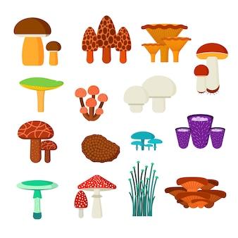 Insieme dell'illustrazione di vettore dei funghi