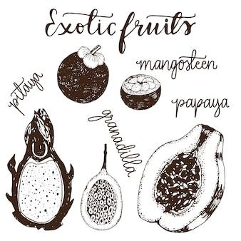 Insieme dell'illustrazione imprecisa disegnata a mano di frutti esotici.