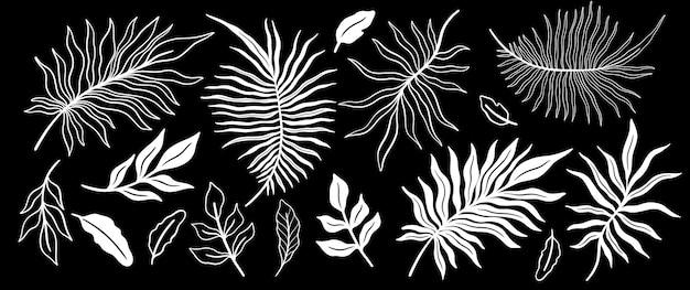Insieme della foglia della pianta tropicale fondo floreale botanico dell'elemento progettazione per la decorazione domestica, tessuto, moquette, avvolgimento.