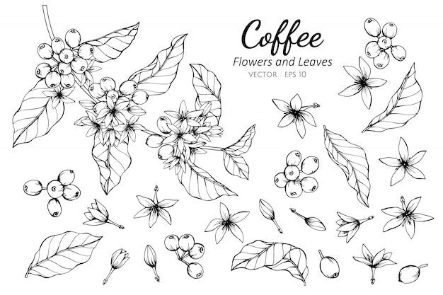 Insieme della raccolta del fiore e delle foglie del caffè che disegna illustrazione.