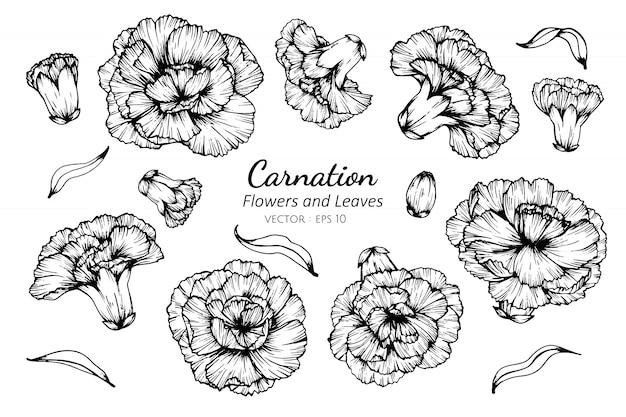 Insieme della raccolta del fiore e delle foglie del garofano che disegnano illustrazione.