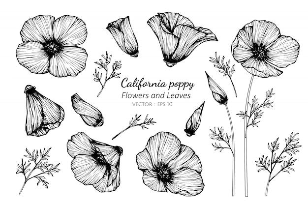 Insieme della raccolta del fiore e delle foglie del papavero di california che disegnano illustrazione.