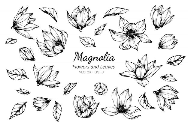 Insieme della raccolta del fiore e delle foglie della magnolia che disegna illustrazione.