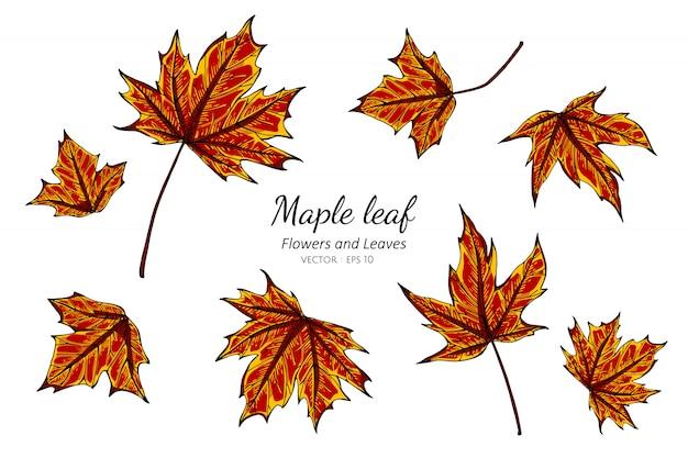 Insieme della raccolta delle foglie di acero che disegnano illustrazione.
