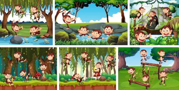 Insieme della scimmia allegra nel fondo della natura