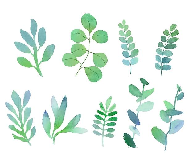 Insieme delle foglie dell'acquerello