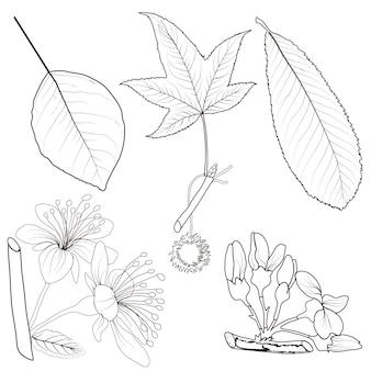 Insieme delle foglie di autunno differenti isolate su fondo bianco