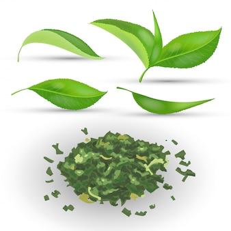 Insieme delle foglie di tè realistiche con fogliame verde e secco fresco sull'illustrazione bianca del fondo. mucchio secco tè secco