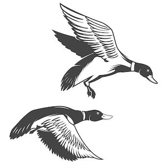Insieme delle icone delle anatre selvatiche su fondo bianco. elementi per logo, etichetta, emblema, segno, marchio.