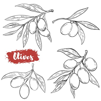 Insieme delle illustrazioni di oliva disegnate a mano su fondo bianco. elementi per poster, menu. illustrazione