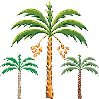 Insieme delle palme da dattero, varie opzioni di colore