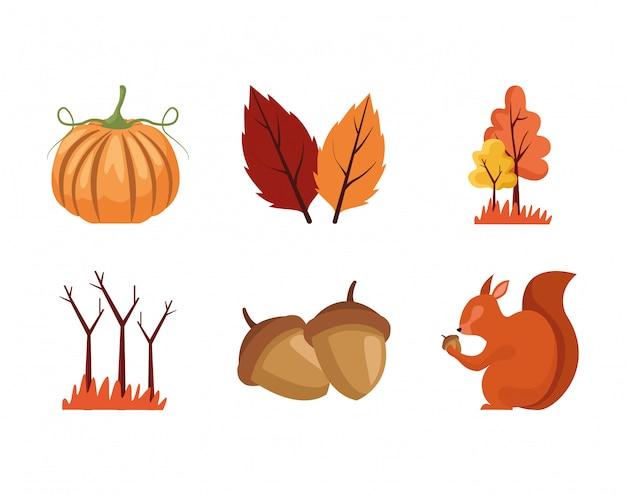Insieme di alberi di stagione autunnale, scoiattolo, zucca e foglie