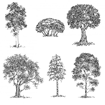 Insieme di alberi disegnati a mano
