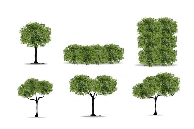 Insieme di alberi realistici su sfondo bianco.
