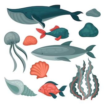 Insieme di animali e oggetti marini. pesci grandi e piccoli, meduse, pietre, alghe e conchiglie marine