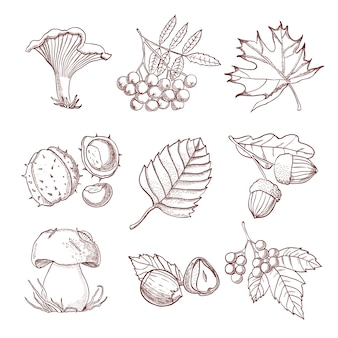 Insieme di autunno disegnato a mano