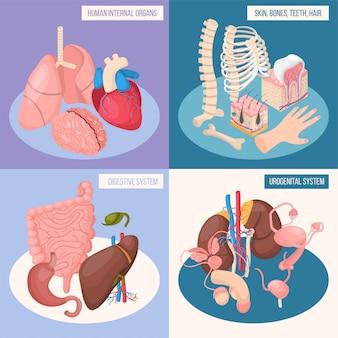 Insieme di concetto di organi umani dei sistemi digestivi e urogenitali pelle ossa denti capelli isometrici