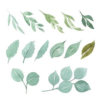 Insieme di elementi dell'acquerello floreale e foglie