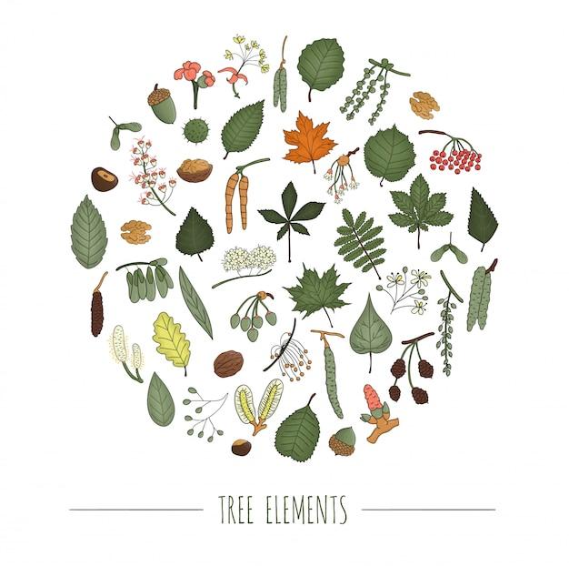 Insieme di elementi di albero colorato isolato su sfondo bianco incorniciato in cerchio. confezione colorata di betulla, acero, quercia, sorbo, castagna, nocciola, tiglio, olmo, foglie di pioppo. concetto di foresta in stile cartone animato