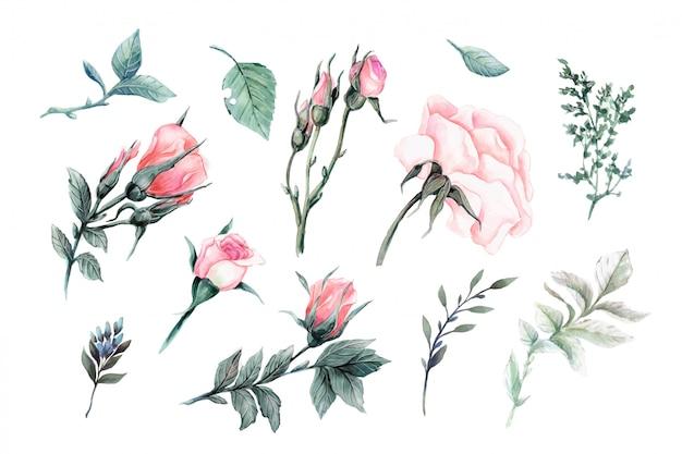 Insieme di elementi di bello vettore realistico di rose rosse