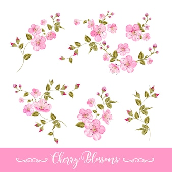 Insieme di elementi di fiori di primavera