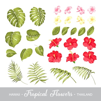Insieme di elementi di fiori tropicali.