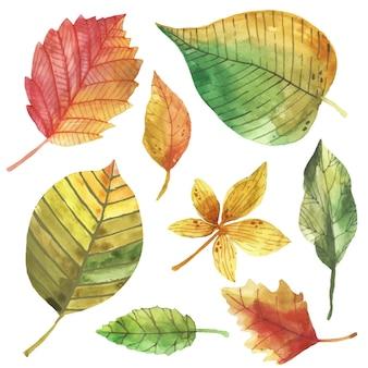Insieme di foglie di autunno di disegno dell'acquerello