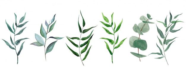 Insieme di foglie e rami dell'acquerello, collezione verde disegnata a mano