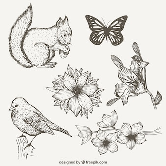 Insieme di mano disegnato natura con gli animali