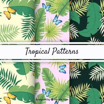 Insieme di modelli di estate tropicale con diverse piante