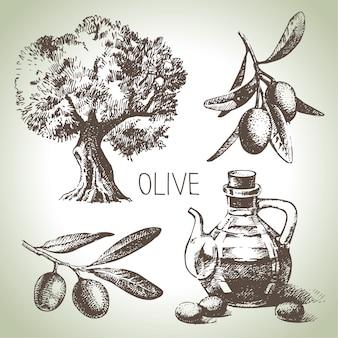 Insieme di oliva disegnato a mano