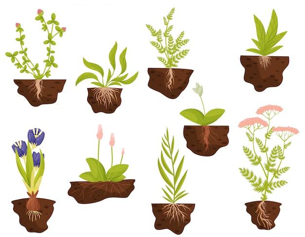 Insieme di piante con radici nel terreno. illustrazione.