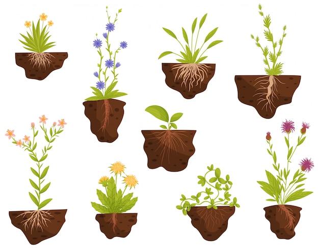 Insieme di piante da fiore con radici nel terreno. illustrazione.