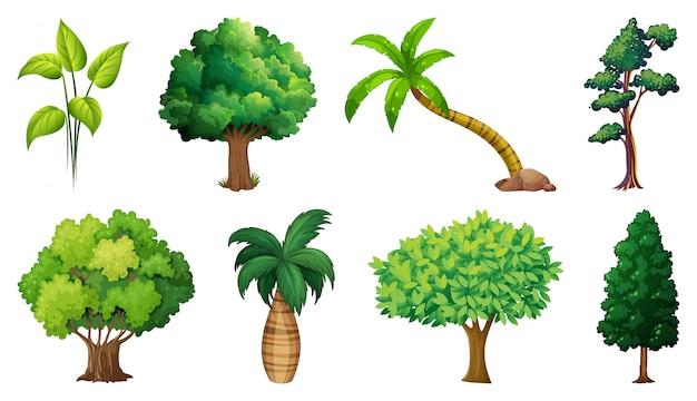 Insieme di piante e alberi di varietà